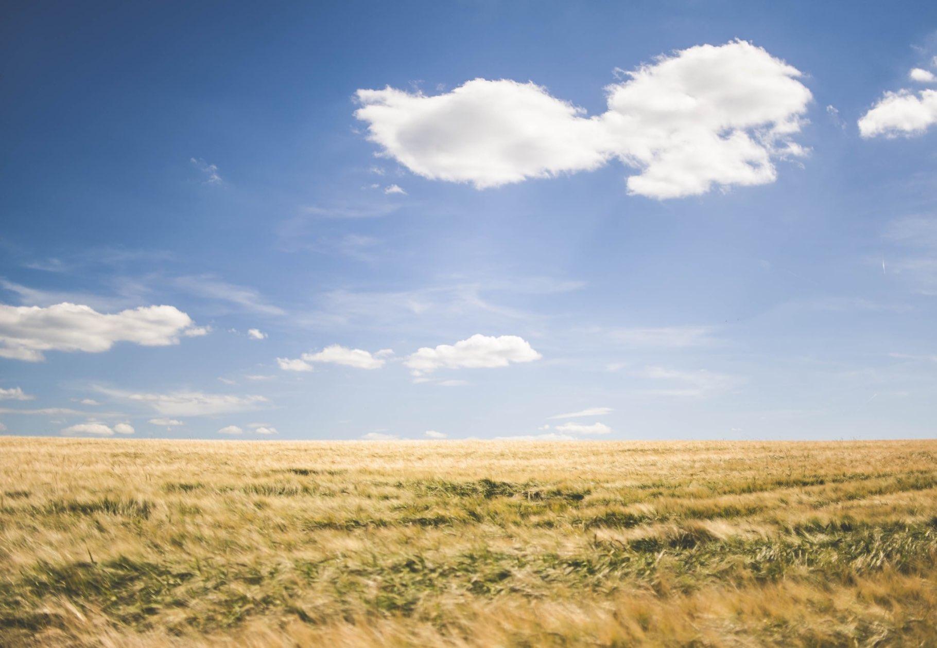 Feld Sonne Umwelt