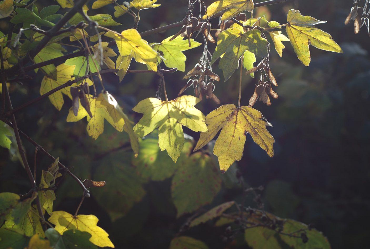 Natur Blätter Sonne