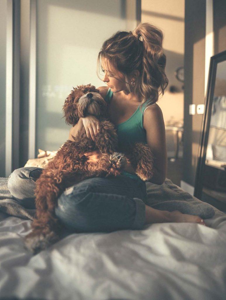 Tageslicht Hund Interieur