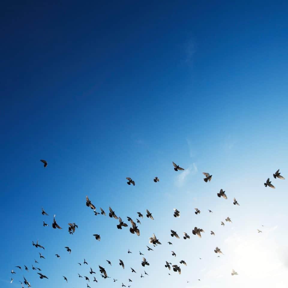 Umwelt Nachhaltigkeit Vögel fliegen Sonne